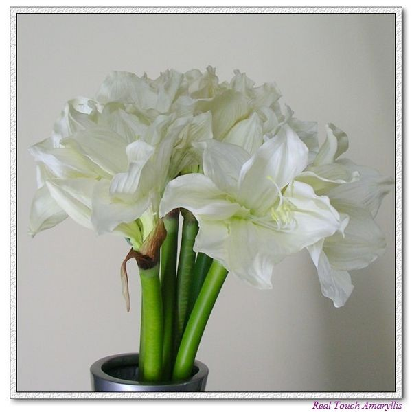Amaryllis artificial flowers real touch pu flowers amaryllis artificial silk flowers mightylinksfo