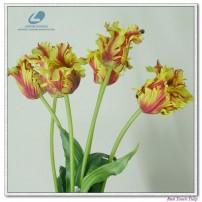 Tulips stem