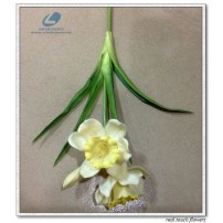 Daffodils Flowers