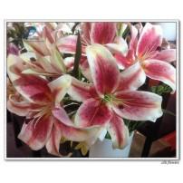 Silk Lily Flower 3D print
