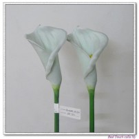 Calla Lily Middle
