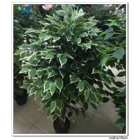 Artificial Ficus