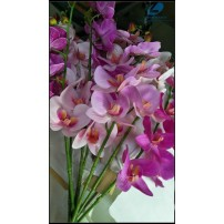 Soft Touch Phalaenopsis Orchid
