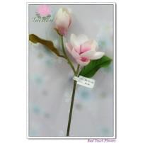 Magnolia 1flower 1bud